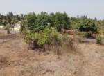 20 Guntha Sea Facing Property Korlai - Alibaug (2)