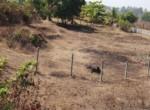 20 Guntha Sea Facing Property Korlai - Alibaug (4)