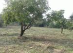 Alibag Property for Sale Dhokawade Awas saswane