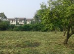Alibag Property for Sale Dhokawade Awas saswane1