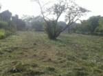 Alibag Property for Sale Dhokawade Awas saswane4