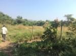 Varsoli property 4acre 1 (4)