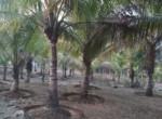 dhokawde 5 acres 6.25 pr guntha (1)