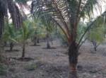 dhokawde 5 acres 6.25 pr guntha (2)