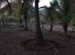 dhokawde 5 acres 6.25 pr guntha (3)