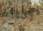 25 Acres in Nagothane roha Alibaug development agreement (13)
