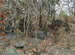 25 Acres in Nagothane roha Alibaug development agreement (8)