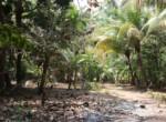 Thal Alibaug 16 Guntha Beautiful property Near Beach (1)
