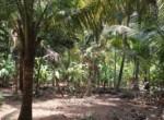 Thal Alibaug 16 Guntha Beautiful property Near Beach (2)