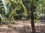 Thal Alibaug 16 Guntha Beautiful property Near Beach (4)