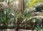 Thal Alibaug 16 Guntha Beautiful property Near Beach (5)