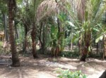 Thal Alibaug 16 Guntha Beautiful property Near Beach (6)