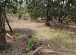 Thal Alibaug 18 Guntha beautiful lake view property (3)