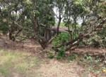 Thal Alibaug 18 Guntha beautiful lake view property (6)
