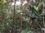 Thal Alibaug 22 Guntha beautiful property (1)