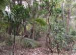 Thal Alibaug 22 Guntha beautiful property (2)