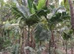 Thal Alibaug 22 Guntha beautiful property (3)