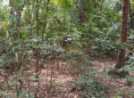 Thal Alibaug 22 Guntha beautiful property (4)