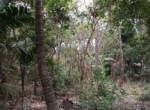 Thal Alibaug 22 Guntha beautiful property (5)