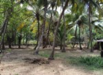 Thal Alibaug 25 Guntha Beautiful beach facing Property (1)