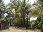 Thal Alibaug 25 Guntha Beautiful beach facing Property (2)