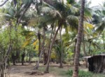 Thal Alibaug 25 Guntha Beautiful beach facing Property (4)