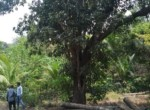 Varsoli Alibaug 15 Guntha Beautiful property Near Beach (2)