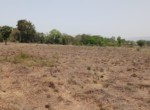 7 Acre beautiful property in Alibag Sogaon (8)