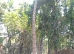 Beautiful 5 Guntha property near Kihim beach in Alibag (2)