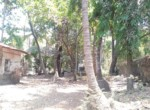 Beautiful 5 Guntha property near Kihim beach in Alibag (5)
