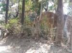 Beautiful 5 Guntha property near Kihim beach in Alibag (6)