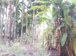 15 5 Guntha Property in Thal Near Beach (7)