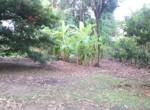 15 5 Guntha Property in Thal Near Beach (9)