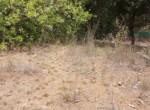Attractive 67 Guntha Property in Kolgaon Near Mandwa Jetty in Alibaug (3)
