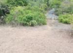 Attractive 67 Guntha Property in Kolgaon Near Mandwa Jetty in Alibaug (5)