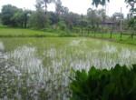 Awas 40 guntha lake view, Maharashtra, India (3)