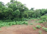 Beautiful 44 Guntha Property in Mandwa with Lot of Mango Trees in Alibaug (1)
