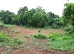 Beautiful 44 Guntha Property in Mandwa with Lot of Mango Trees in Alibaug (10)