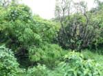 Beautiful 44 Guntha Property in Mandwa with Lot of Mango Trees in Alibaug