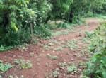 Beautiful 44 Guntha Property in Mandwa with Lot of Mango Trees in Alibaug (2)