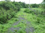 Beautiful 44 Guntha Property in Mandwa with Lot of Mango Trees in Alibaug (3)