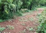 Beautiful 44 Guntha Property in Mandwa with Lot of Mango Trees in Alibaug (5)