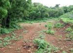 Beautiful 44 Guntha Property in Mandwa with Lot of Mango Trees in Alibaug (6)