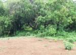 Beautiful 44 Guntha Property in Mandwa with Lot of Mango Trees in Alibaug (7)