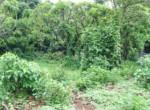 Beautiful 44 Guntha Property in Mandwa with Lot of Mango Trees in Alibaug (8)