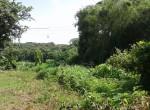 Mandwa Alibag 3 Acres Gaothan touch property (1)