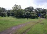 Mandwa Alibag 3 Acres Gaothan touch property (2)