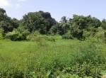 Mandwa Alibag 3 Acres Gaothan touch property (5)