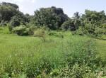 Mandwa Alibag 3 Acres Gaothan touch property (6)