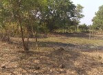 1 Acre Plot with Coconut and Mango plantation near Mand (3)